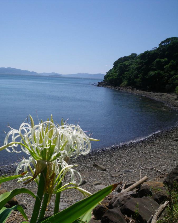熊本県水俣市-水遊びの浜【グリーンスポーツみなまた】